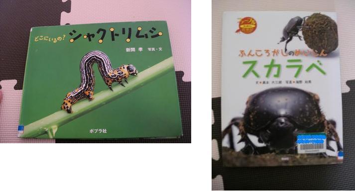虫の写真絵本