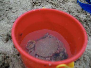 鍋田浜海水浴場で磯の生き物探し