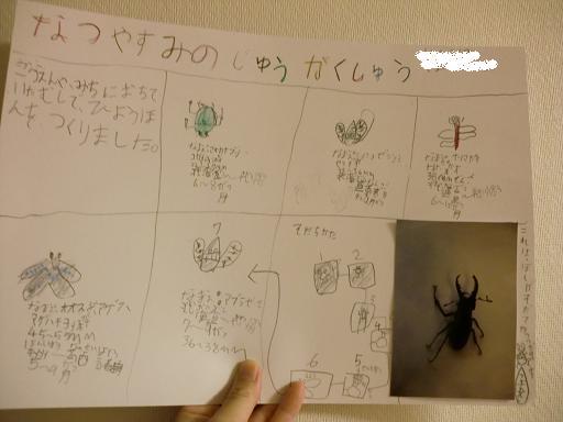 小1息子、夏休みの自由研究(昆虫標本作り)
