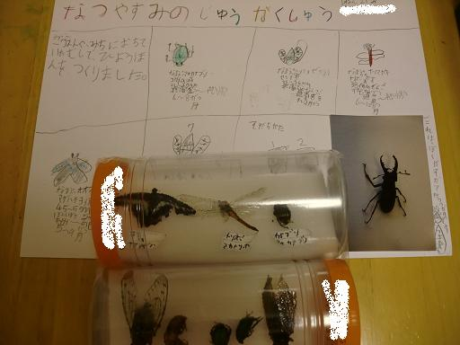 死んだ虫で昆虫作り かかった費用